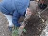 jardinage-12