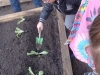 jardinage-4